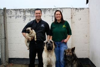 Staff with dogs